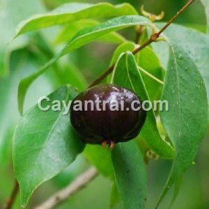 Trái Surinam cherry