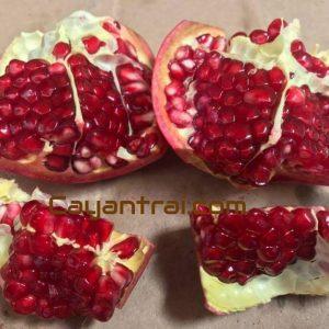 Trái lựu đỏ lùn (Ảnh sưu tầm)