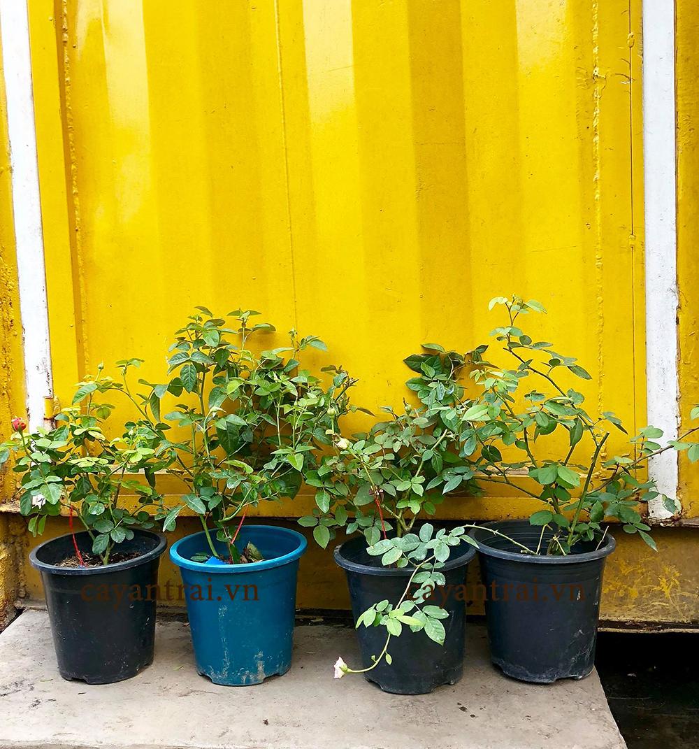 Hoàng Long Garden – Giống cây trồng cây ăn trái