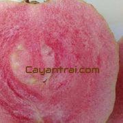 Mặc dù gọi là giống ruột đỏ không hạt nhưng loại này vẫn có vài hạt không đáng kể